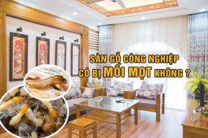 Sàn gỗ có bị mối mọt không? Cách chống mối mọt sàn gỗ