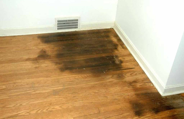 Nguyên nhân sàn gỗ bị mối mọt