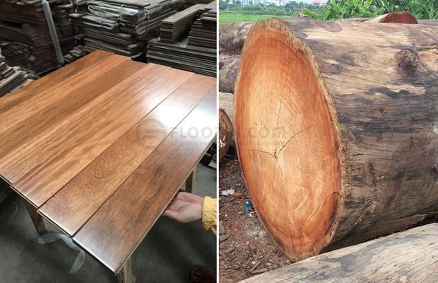 Gỗ lim nam phi có tốt không? Báo giá ván sàn gỗ lim         thế hệ nhất